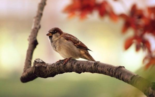 Почему птицы не падают, когда спят на ветке?
