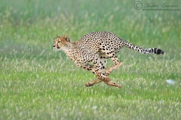 ТОП-10 самых быстрых животных на нашей планете