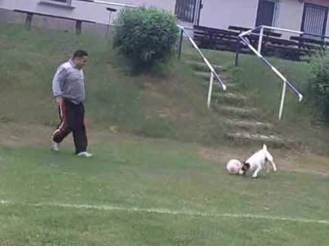 Собака играет в виртуальный футбол, вот это игра!
