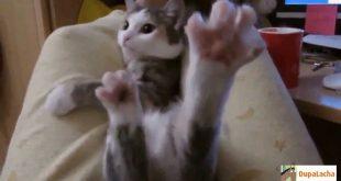 коты и кошки которые умеют поднимать настроение