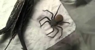 пауки тоже делают порой очень смешные вещи