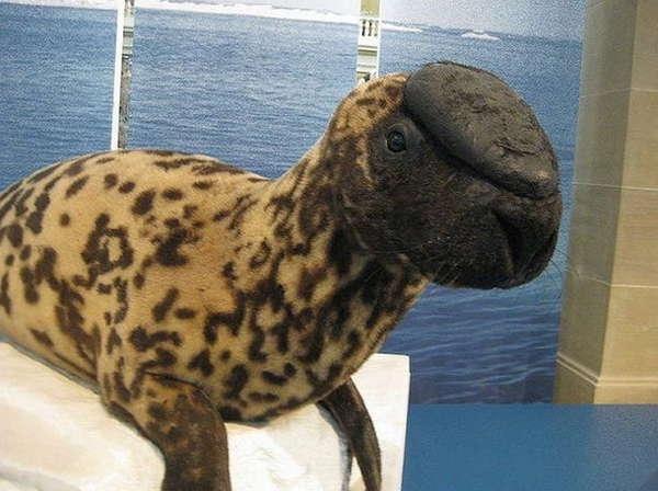 Удивительные животные, которых мы скоро не увидим
