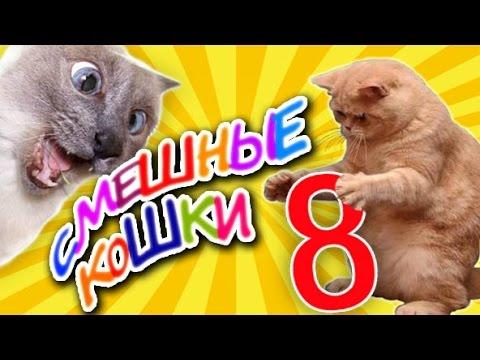 Любимые наши кошки летняя сборочка 2014