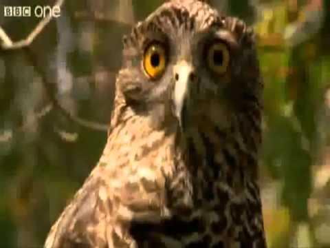 Птицы и животные со смешным поведением