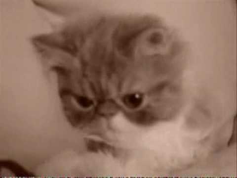 Уникальные рожицы кошек и собак