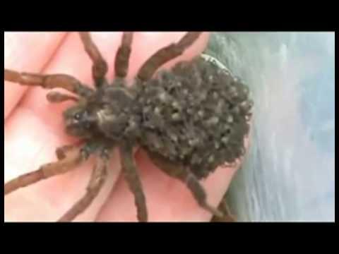 Вы боитесь пауков