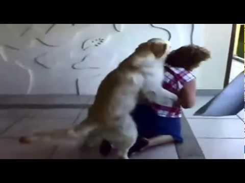 Доигралась с большой собакой