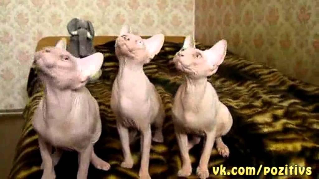 Кошки танцуют под классику