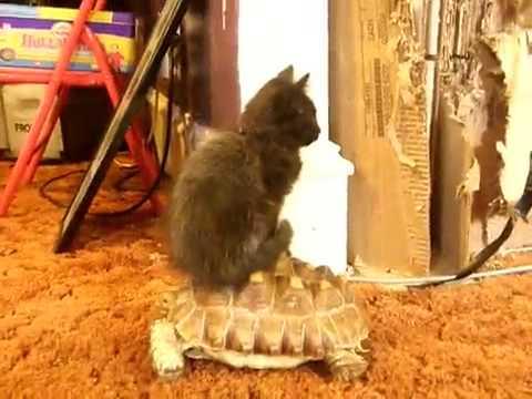 котенок и черепаха