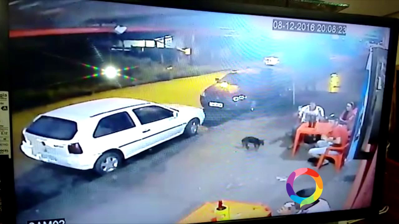 О судьбе собаки ничего не сообщается