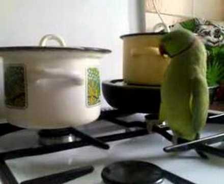попугай который хочет сильно кушать