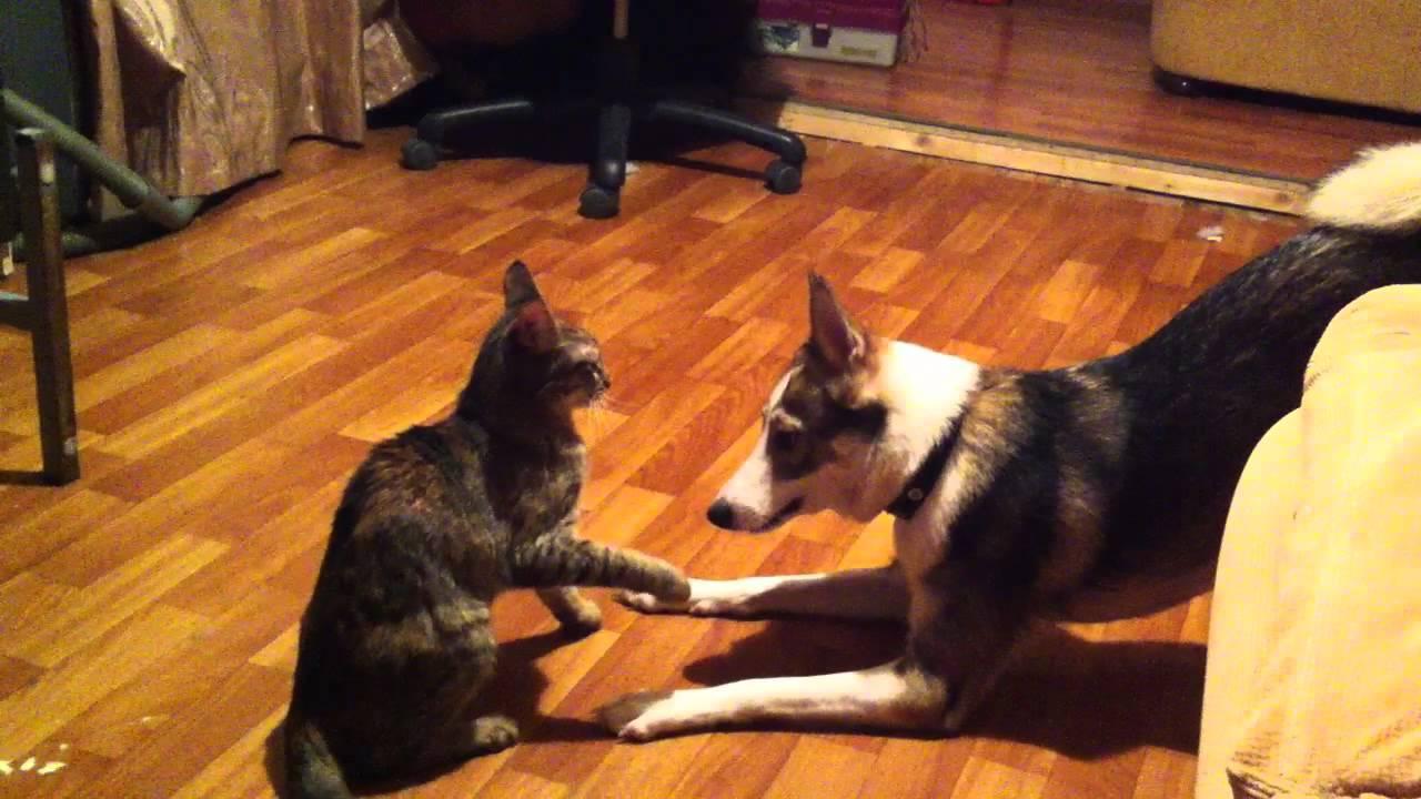 Собака и кошка дерутся за лежак