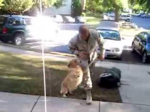 Собака вне себя от радости из армии вернулся хозяин