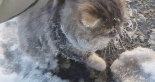 Видео спасения вмерзшего в лед кота взорвало Рунет