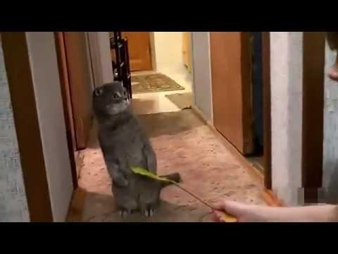 Котик немного удивлен