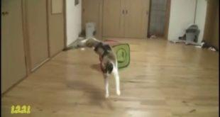Кошачьи прыжки в замедленном действии