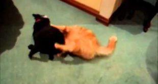 кошки и собаки любят подраться