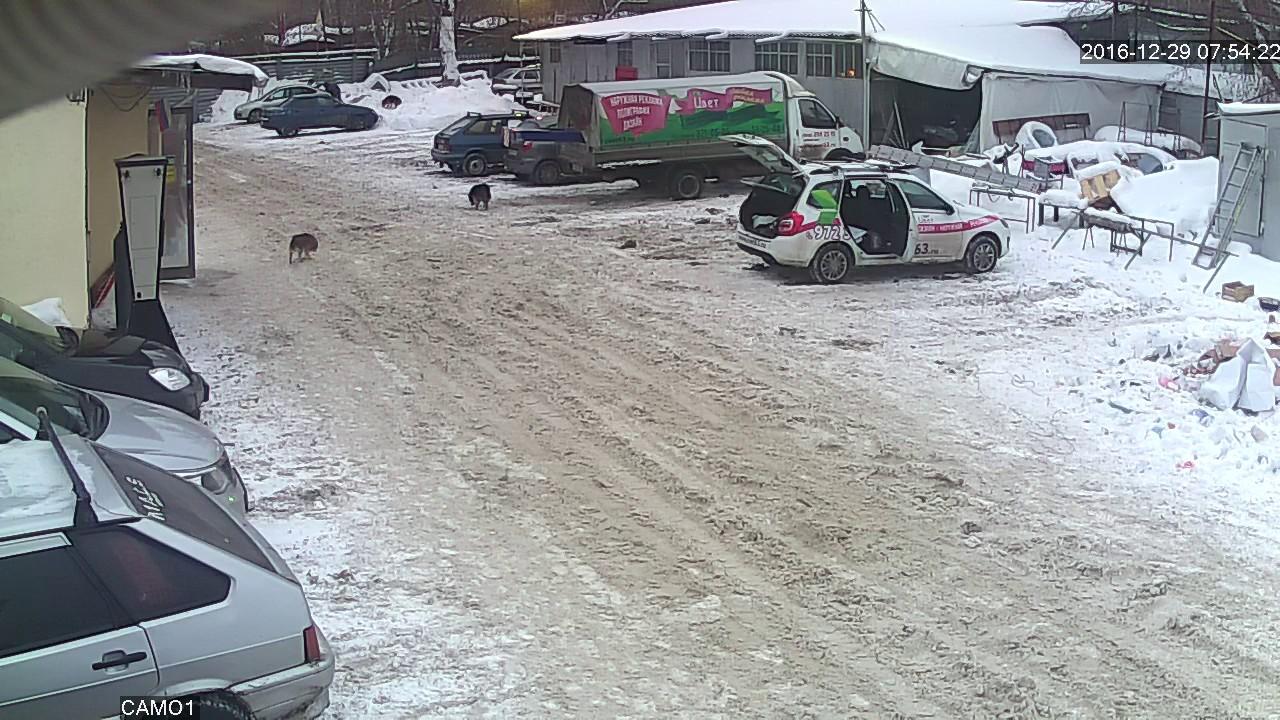 Самарская собака, которая сегодня появилась во всех новостях
