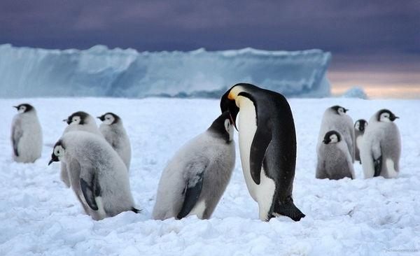 16 влюблённых животных, у которых стоит поучиться верности