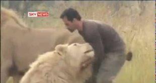 Его друзья это львы