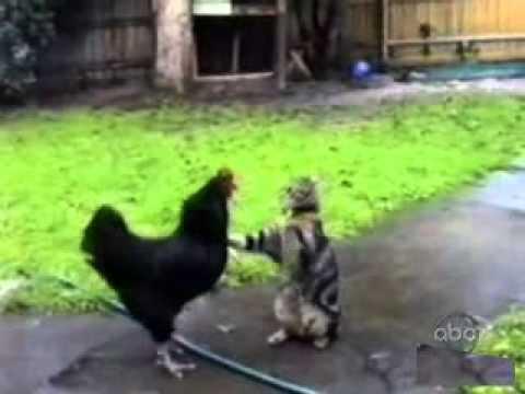 Интересные и забавные кошки