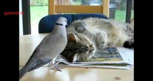 Кошки и их друзья
