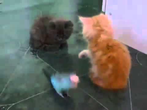 маленький попугай и два котенка которые играются с ним