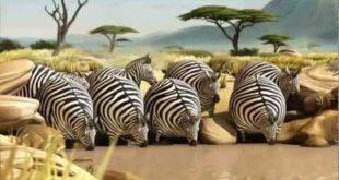 Необыкновенные нарезки с животными
