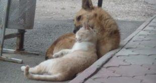 Самые настоящие друзья