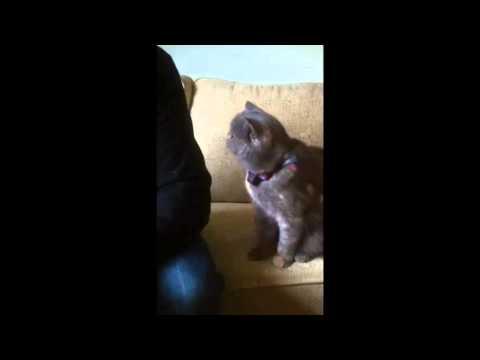 Вежливый котик просит за обратить на него внимание