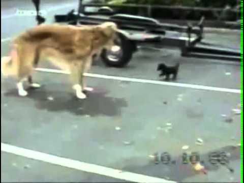 животные которые подверглись необыкновенным ситуациям и конечно же повели себя также