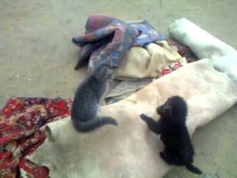 Маленький щенок и котенок балуются на улице
