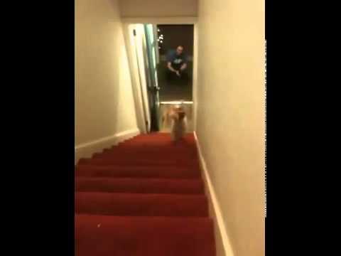 Неплохая пробежка на передних лапах по ступеням