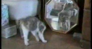 ох уж эти кошечки