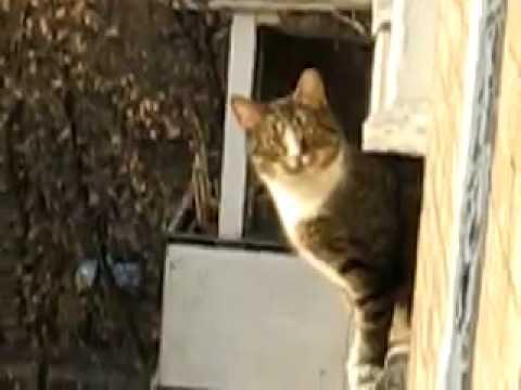 Паркур кошка