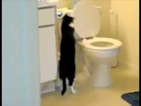 Кошки любят смывать воду в унитазе
