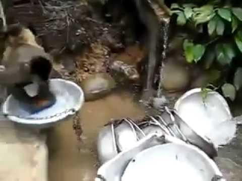 Обезьяна моет посуду