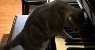котик играет на пианино