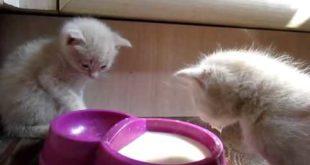 котята которые необыкновенно кушают