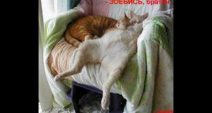 Необыкновенные положения кошек