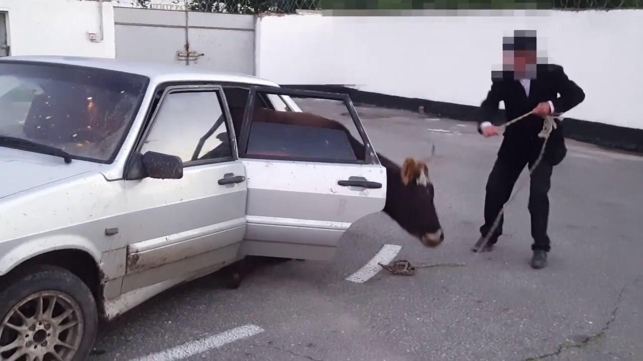 Несомненный успех полицейских из КЧР!