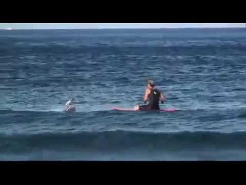 Серфингист и небольшая волна