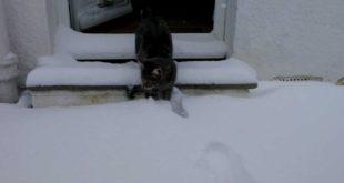 Кот увидел снег впервые в жизни