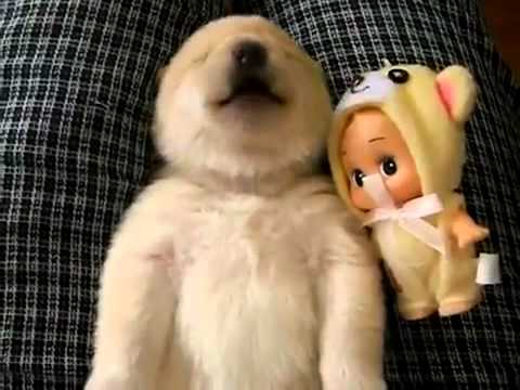 Маленький щенок и его разговор во сне