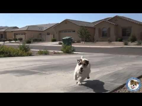 собака которая делает всю работу за свою хозяйку