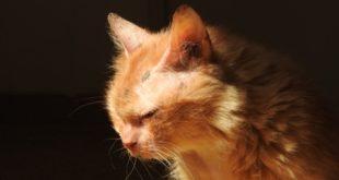 Эта кошка разучилась доверять людям, но оказалось — в мире есть добро