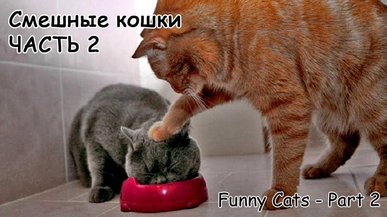 Смешные кошки подборка 2013