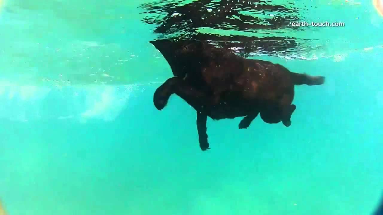 Собака играет с дельфинами