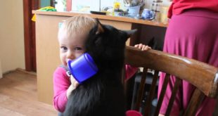 Маленькая девочка подружилась с кошкой