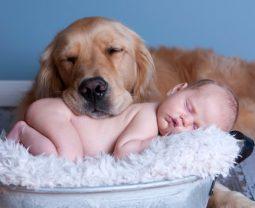 Какая порода собак лучше всего подходит для дома, где есть дети?